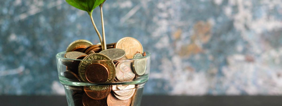 Green plant in clear glass vase with Euro coins