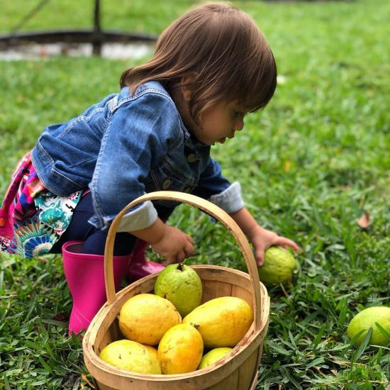 Baby girl picking fruit